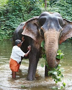 Lakshmi the elephant at Serenity House - part of Malabar Escapes