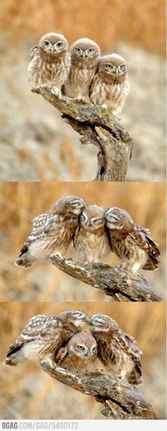 ~!~Owly affection...