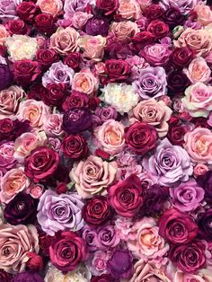 Flower Background Wallpaper, Flower Phone Wallpaper, Flower Backgrounds, Flower Wallpaper, Wallpaper Backgrounds, Iphone Wallpaper, Flower Screensaver, Pretty Flowers, Pink Flowers
