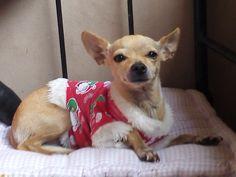 pijama navidad con bordes blanco