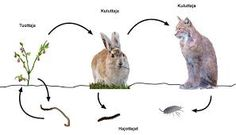 Kuvahaun tulos haulle ravintoketju Learning Environments, Science And Nature, Animals, Natural, Animaux, Animales, Animal, Nature, Dieren
