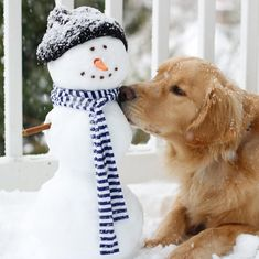 Christmas Dog, Christmas Photos, Funny Animals, Cute Animals, Funniest Animals, I Love Dogs, Cute Dogs, Golden Life, Happy Pictures