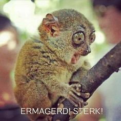 """I find these """"ermagerd"""" pictures WAY funnier than they really are... Haha"""