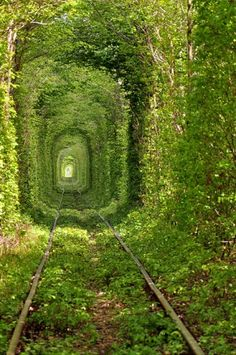 Beautiful train track tree tunnel in Kleven in the Ukraine.