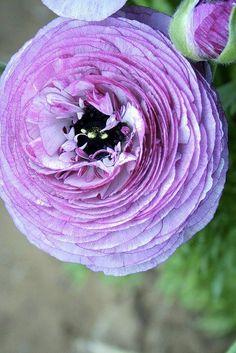 ÇiçeK & GüL