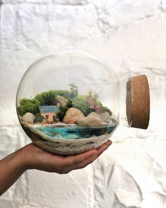 This Company Makes Incredible Micro Ecosystems In Pots And You Will Definitely Want One In Your Home Fish Tank Terrarium, Water Terrarium, Terrarium Plants, Glass Containers, Container Plants, Container Gardening, Glass Jars, Interior Design Plants, Diy Garden Fountains