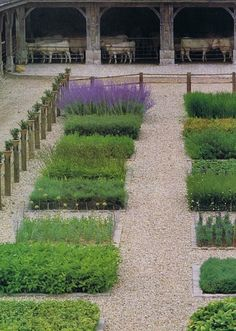 Herb garden in Normandy...taken from a vintage Home & Garden mag.