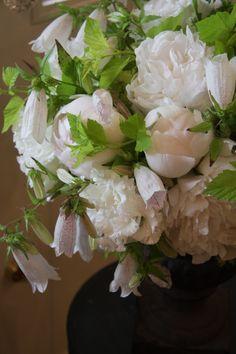 peony Shiro-tae,eustoma Corsage white,Campanula punctata,physocarpus Luteus