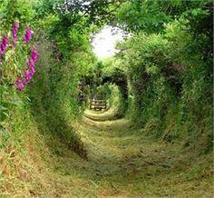 Irish Garden for leprechauns?