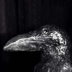 Bronze #crow