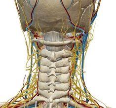 Vertigini da disturbo cervicale: i 5 esercizi più efficaci - L'Altra Riabilitazione