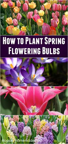 Fall planting will bring gorgeous flowering Spring bulbs! Learn how easy and inexpensive it is to make your landscape gorgeous in a few steps!