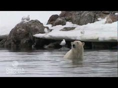 This polar bear does a handstand underwater. Why? Because he can, and the humans watching him probably can't.