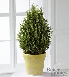The FTD® Rosemary Riches Tree by Better Homes and Gardens®- Shown