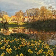 When the light makes Copenhagen a living painting. #copenhagen #denmark #spring #igersdenmark #goldenhour by obi_juan_shinobi