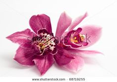 orchid isolated on white background by llaszlo, via ShutterStock