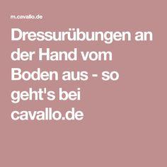 Dressurübungen an der Hand vom Boden aus - so geht's bei cavallo.de