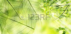 foresta: foresta di primavera - foglie fresche e ai raggi solari