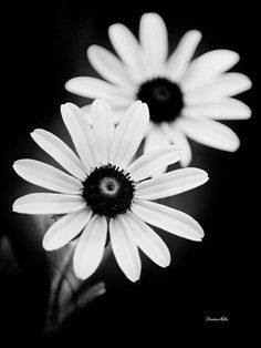 3d Flower Tattoos, Realistic Flower Tattoo, Black And White Flowers, Black And White Pictures, Daisy Flower Pictures, Fine Art Photography, White Photography, Thing 1, Floral Prints