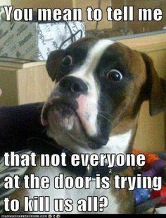 Dog Catch Phrases Goldenacresdogs