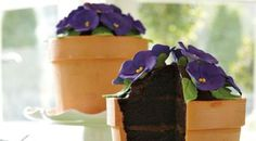 A #chocolate #cake disguised as a flower pot, with sugar flowers!