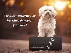 Auf der Startseite findest Du alle Themen im Überblick zur Lieblingbox und kannst direkt die gesunde Überraschungsbox für Deinen Hund bestellen oder selbst zusammenstellen. Die perfekte Hundeüberraschung!