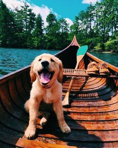 Golden retriever pup AND a cedar canoe? Sign me up! Golden retriever pup AND a cedar canoe? Sign me up! Perros Golden Retriever, Chien Golden Retriever, Retriever Dog, Cute Puppies Golden Retriever, Animals And Pets, Baby Animals, Funny Animals, Cute Animals, Funny Dogs