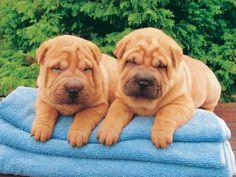 El premio y el castigo en los perros: fundamentales para su educación