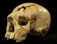 Neanderthal Ancestor Skulls Shed Light on Evolution - Science Nutshell