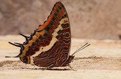 Some butterfly... by reidar45. @go4fotos