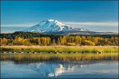 https://flic.kr/p/hz6pup | Mount Adams from Trout Creek Lake | Mount Adams and Canada geese on Trout Lake Creek at Trout Lake Natural Area Preserve, Washington.