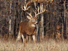 white tail deer hunting | Pazazz Social
