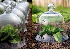 Le cose belle sono spesso anche molto delicate. Anche in giardino. Le Victorian Bells prodotte dagli inglesi Haxnicks sono uno strumento oltre che utile, anche esteticamente sorprendente tra le righe dell'orto