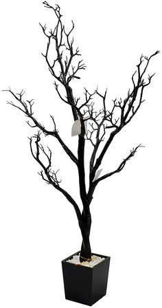 Galt International Potted Accent Tree, 4-Feet, Black >>> You can find more details by visiting the image link.