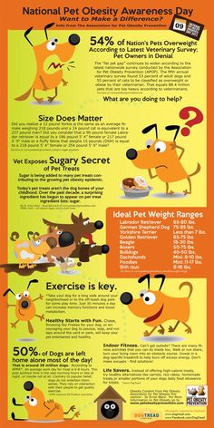 Pet Obesity Awareness Day – Infographic awareness How To Determine Your Dog's Age in Human Years? (forget the number Dog Care Tips, Pet Care, Veterinary Care, Veterinary Technician, Veterinary Medicine, Animal Nutrition, Pet Nutrition, Dog Ages, Dog Information