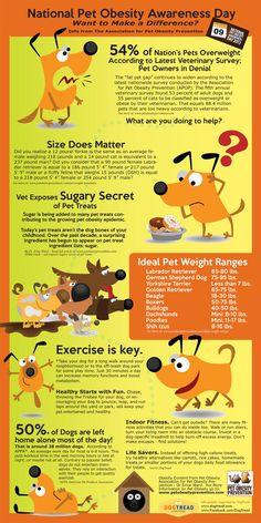 Pet Obesity Awareness Day – Infographic #pet #obesity #getpetfit