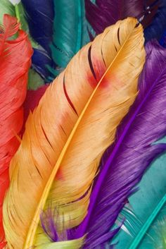 colorful goose feathers