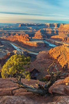 Overlook at Dead Horse Point // Moab // Utah / nature / photopaysage / désert / rivière / arbre