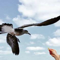 Fly little birdie!