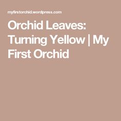 Why are my orchid leaves turning yellow? If your bottom orchid leaf has turned yellow, it does not necessarily mean your orchid is sick or dying. You can not prevent your bottom orchid leaves from … Orchid Leaves Turning Yellow, Orchid Care, Houseplants, Cleaning, Gardening, Orchards, Greenhouses, Bali, Indoor