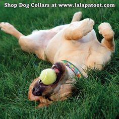 Shop Dog Collars at www.lalapatoot.com #lalapatoot #dogs #collars #dogcollars