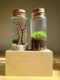 My nano mossarium and marimo moss ball set from Moss+Twig. : terrariums https://www.reddit.com/r/terrariums/comments/3pnss3/my_nano_mossarium_and_marimo_moss_ball_set_from/