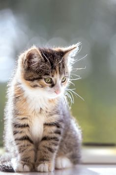 Sunny by Thomas Oberascher on 500px