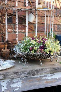 黒田園芸 寄せ植え スイートアリッサム Greenhouse Gardening, Container Gardening, Bouquet, Hanging Baskets, Botany, Floral Arrangements, Beautiful Flowers, Succulents, Backyard