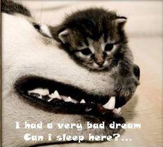 Can I Sleep Here