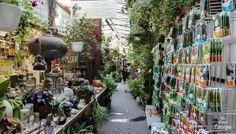 Le Marché aux Fleurs de Paris @ The Great Escape