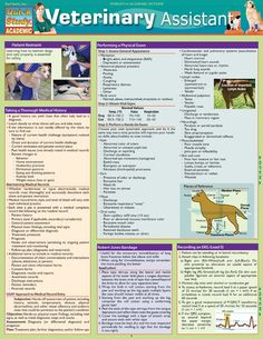 Looking to begin your career as a veterinary assistant? We're here to help you in achieving this goal with our newest 6 page guide, which provides the most comprehensive information on properly treating pets in a medical setting. Discussions of various veterinary terms and procedures, as well as use