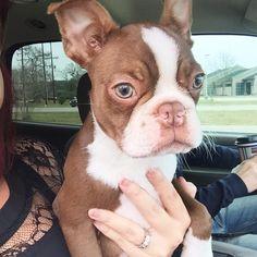 aww so cute that looks like my dog