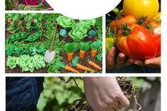 15 Useful Gardening Tips for Beginners