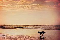 Sunday morning - Pinned by Mak Khalaf - Landscapes beachcloudsdogglowlightoceansandseaskysummersunsunrisesunsettravelwater by evanturennout